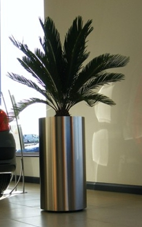 pálmafa iroda