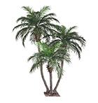 Phoenix Palm (3 törzs)