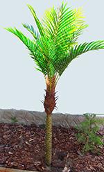 Phoenix pálma mini 1,8m